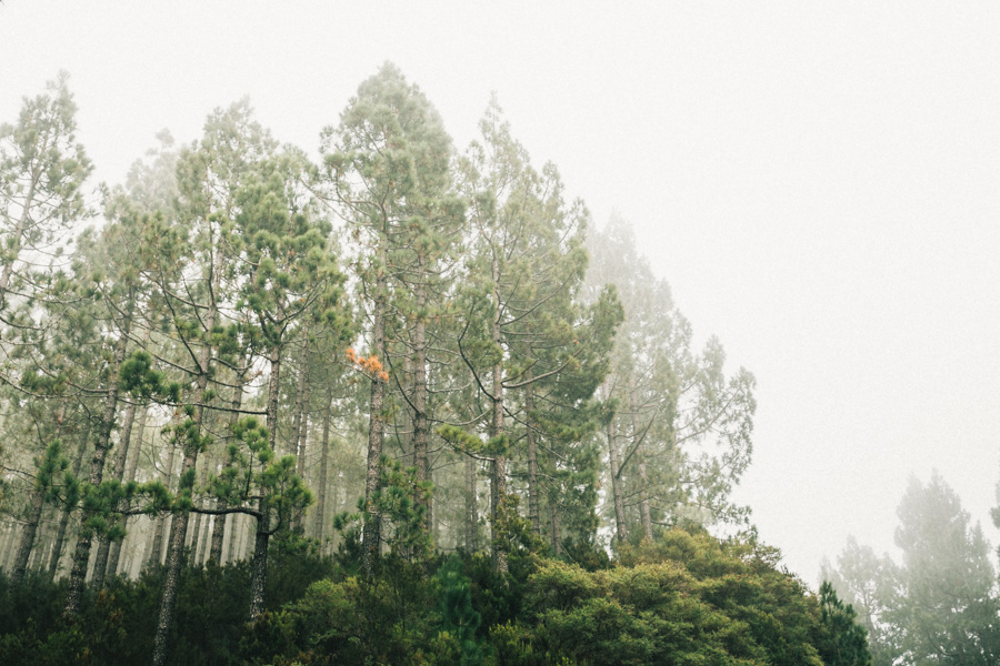 preboda en el teide fran decatta fotografo de bodas 012